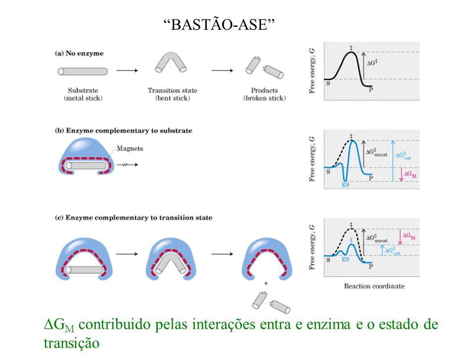 BASTÃO-ASE DGM contribuido pelas interações entra e enzima e o estado de transição