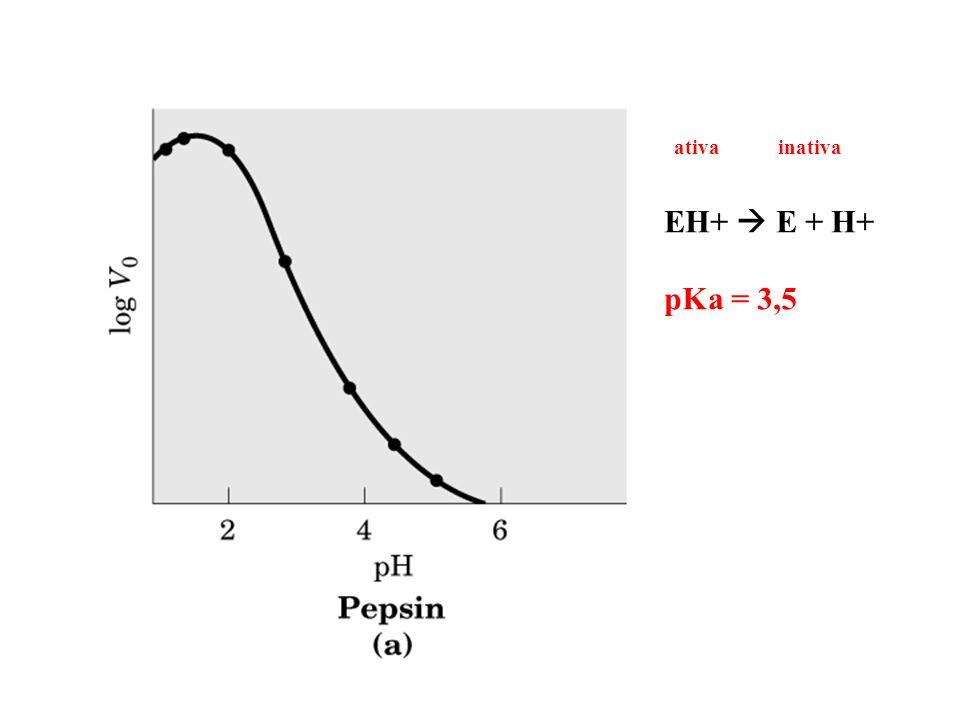 ativa inativa EH+  E + H+ pKa = 3,5