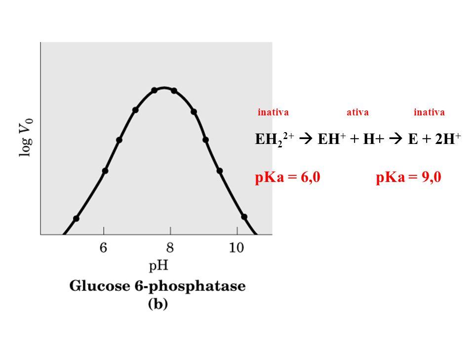 inativa ativa inativa EH22+  EH+ + H+  E + 2H+ pKa = 6,0 pKa = 9,0.
