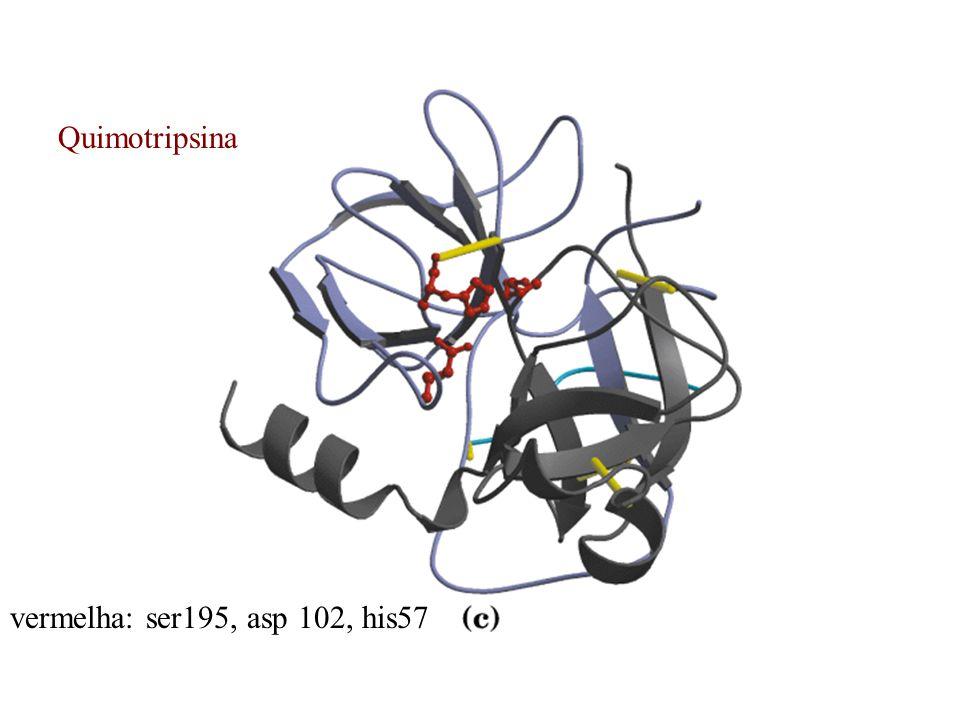 Quimotripsina vermelha: ser195, asp 102, his57