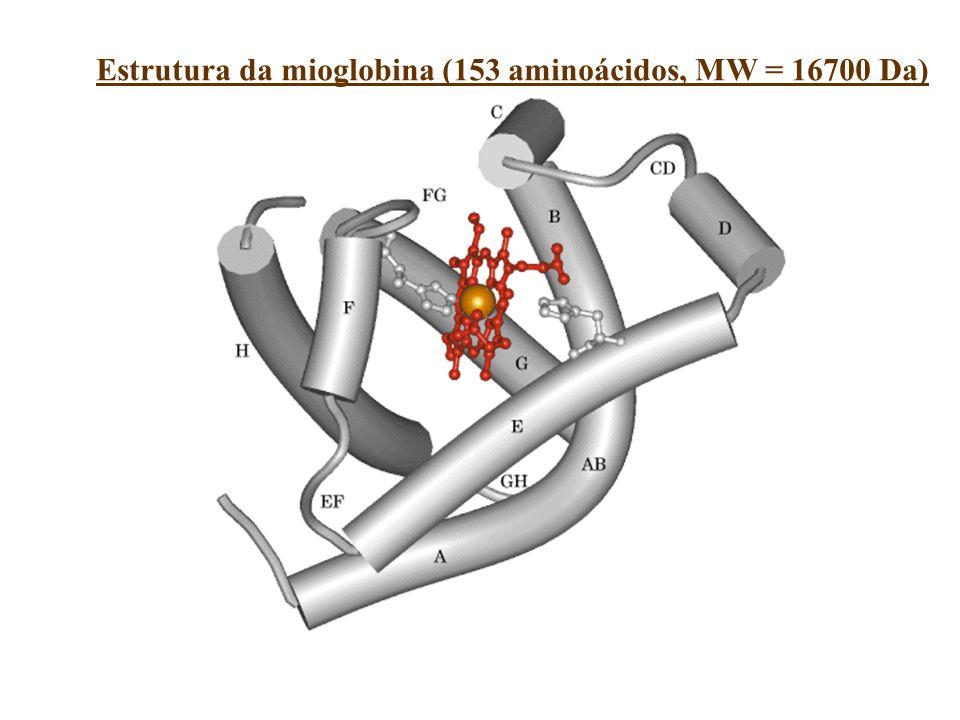 Estrutura da mioglobina (153 aminoácidos, MW = 16700 Da)