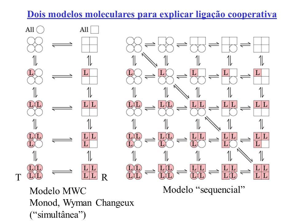 Dois modelos moleculares para explicar ligação cooperativa