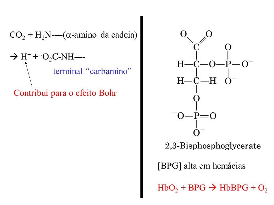 CO2 + H2N----(a-amino da cadeia)