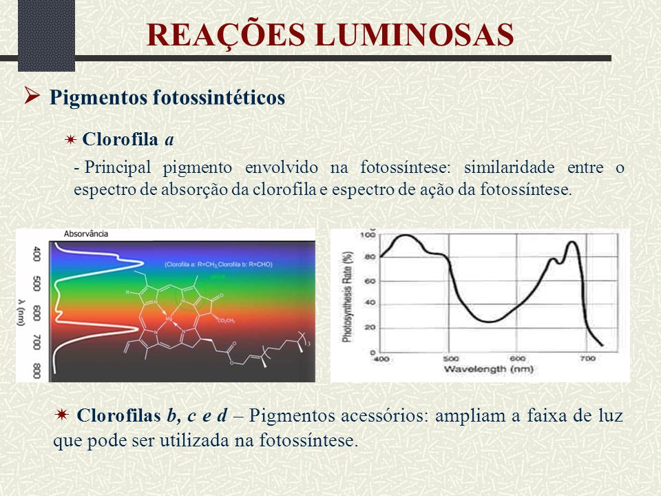 REAÇÕES LUMINOSAS  Pigmentos fotossintéticos
