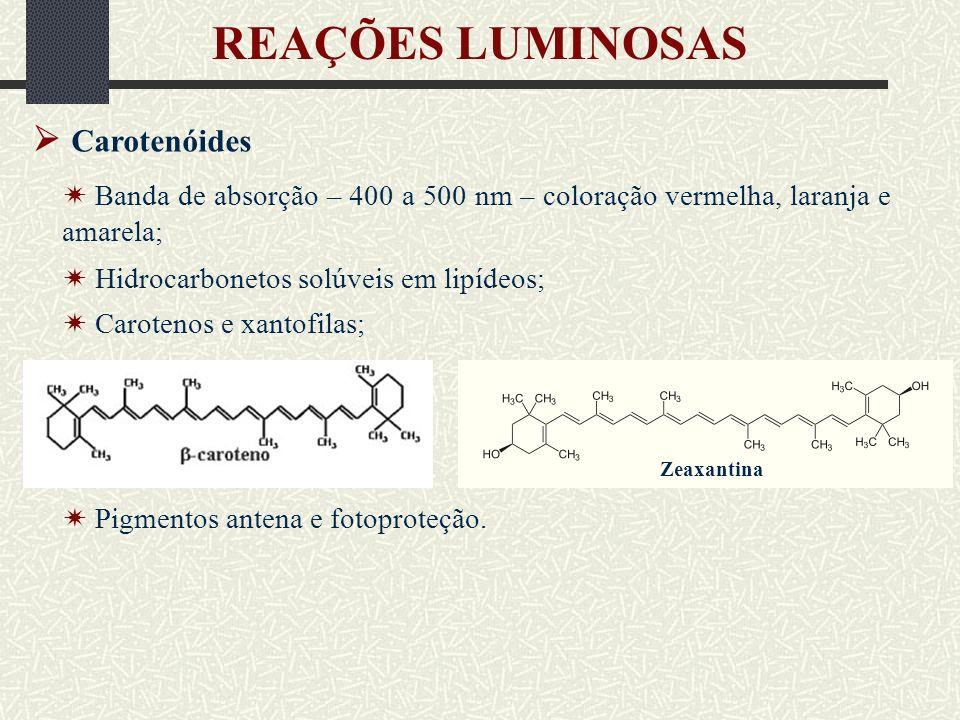 REAÇÕES LUMINOSAS  Carotenóides