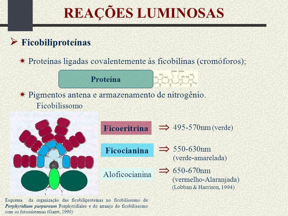 REAÇÕES LUMINOSAS  Ficobiliproteínas   