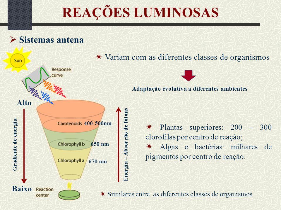 REAÇÕES LUMINOSAS  Sistemas antena