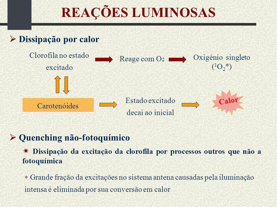 REAÇÕES LUMINOSAS  Dissipação por calor  Quenching não-fotoquímico