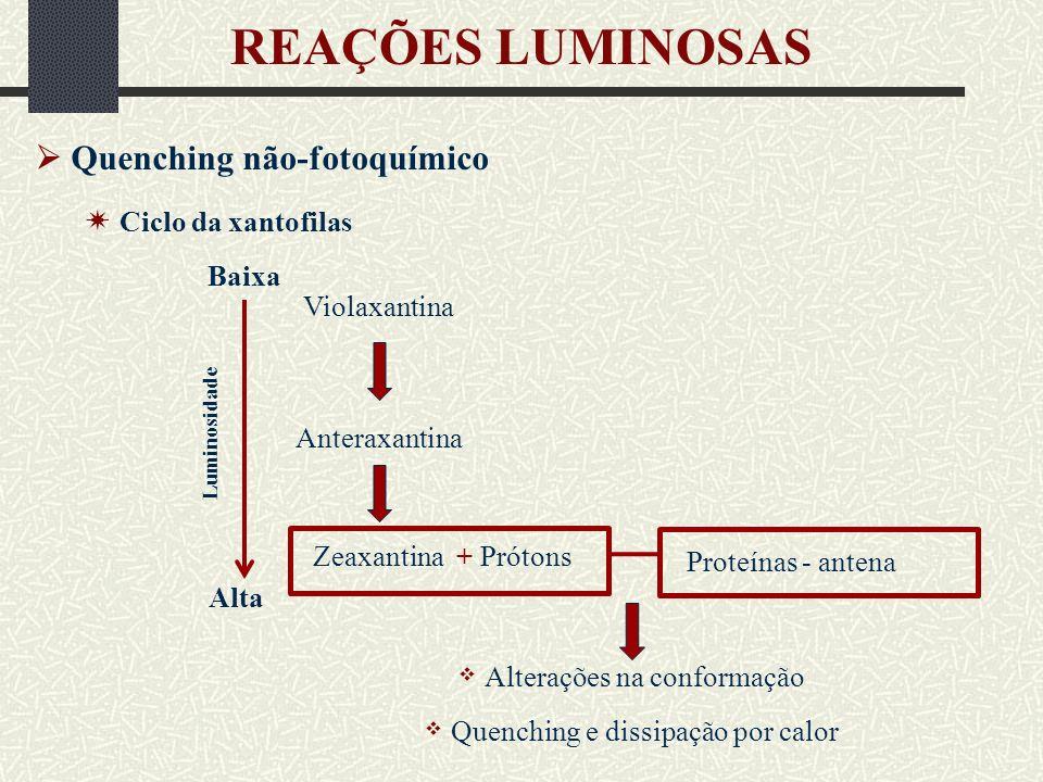 REAÇÕES LUMINOSAS  Quenching não-fotoquímico  Ciclo da xantofilas
