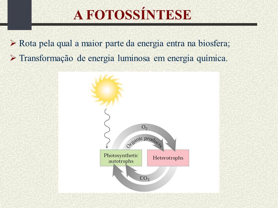 A FOTOSSÍNTESE  Rota pela qual a maior parte da energia entra na biosfera;  Transformação de energia luminosa em energia química.