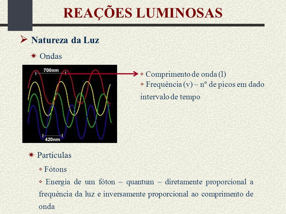 REAÇÕES LUMINOSAS  Natureza da Luz  Ondas  Partículas