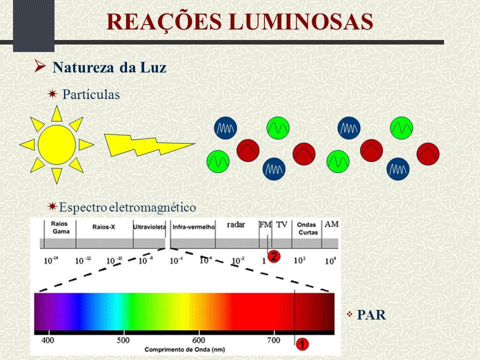 REAÇÕES LUMINOSAS  Natureza da Luz  Partículas