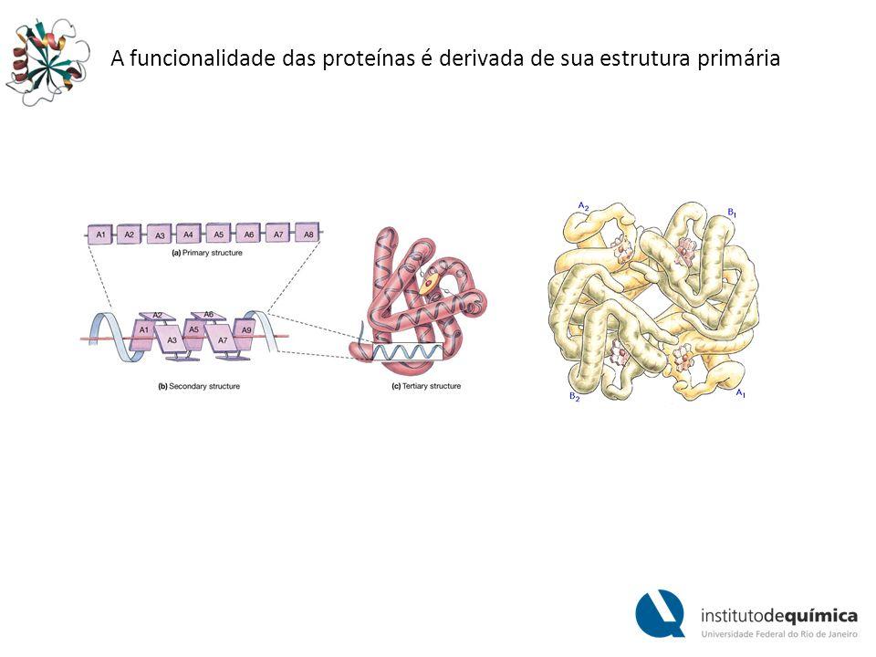 A funcionalidade das proteínas é derivada de sua estrutura primária