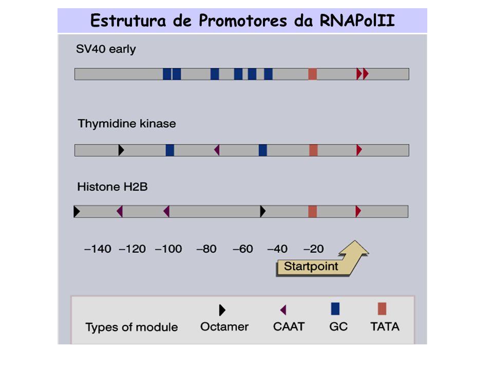 Estrutura de Promotores da RNAPolII