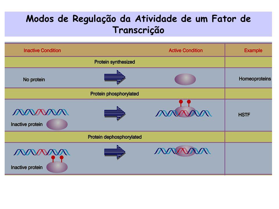 Modos de Regulação da Atividade de um Fator de Transcrição