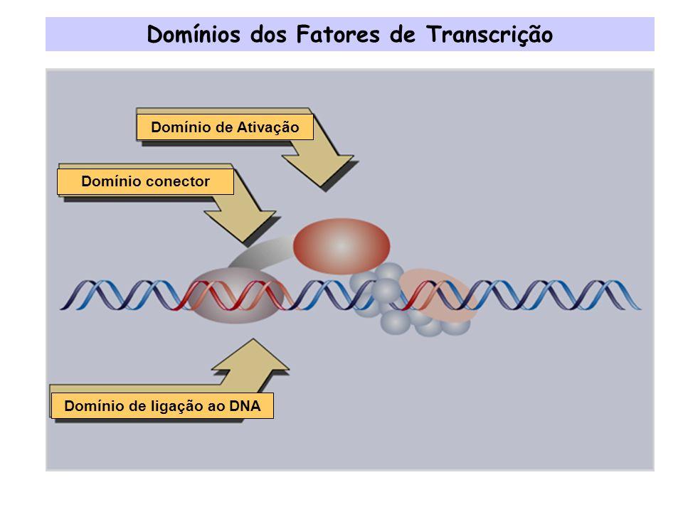 Domínios dos Fatores de Transcrição