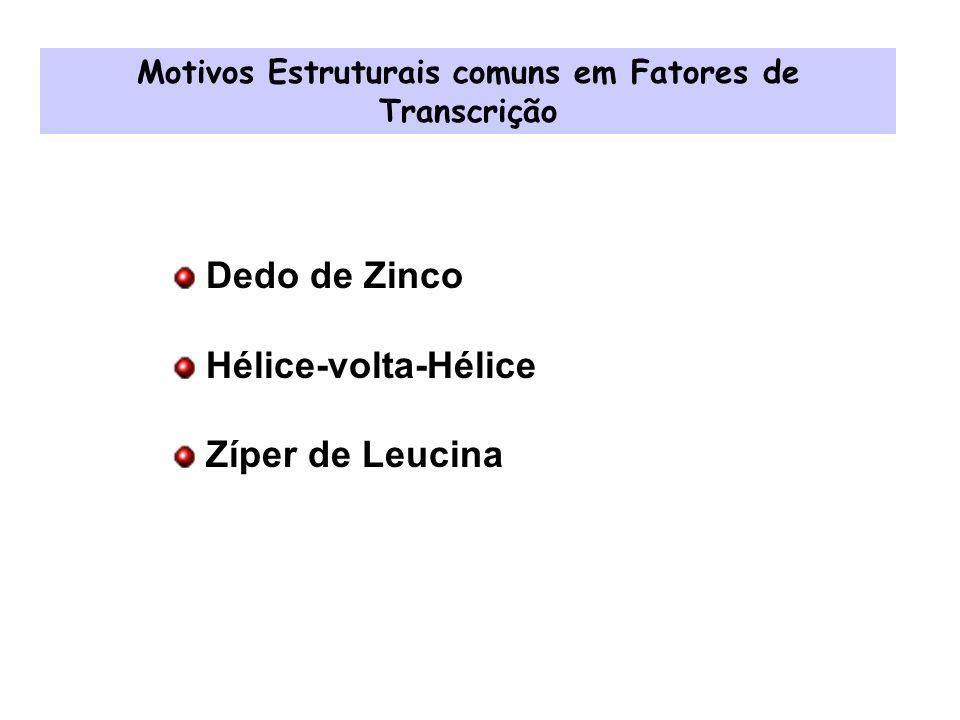 Motivos Estruturais comuns em Fatores de Transcrição