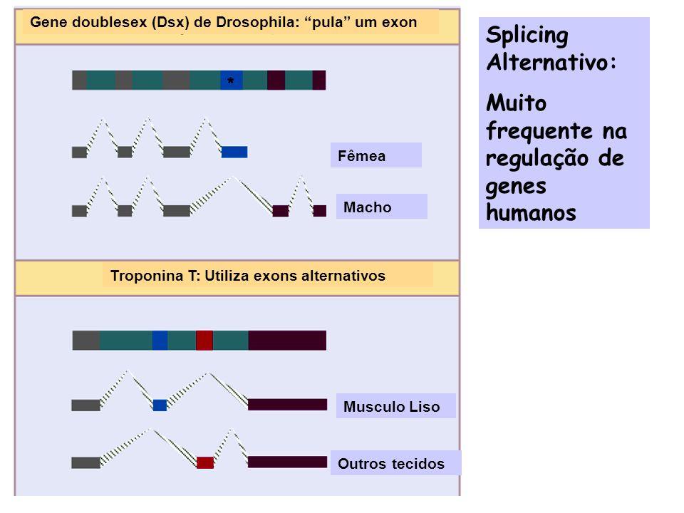 Splicing Alternativo: Muito frequente na regulação de genes humanos
