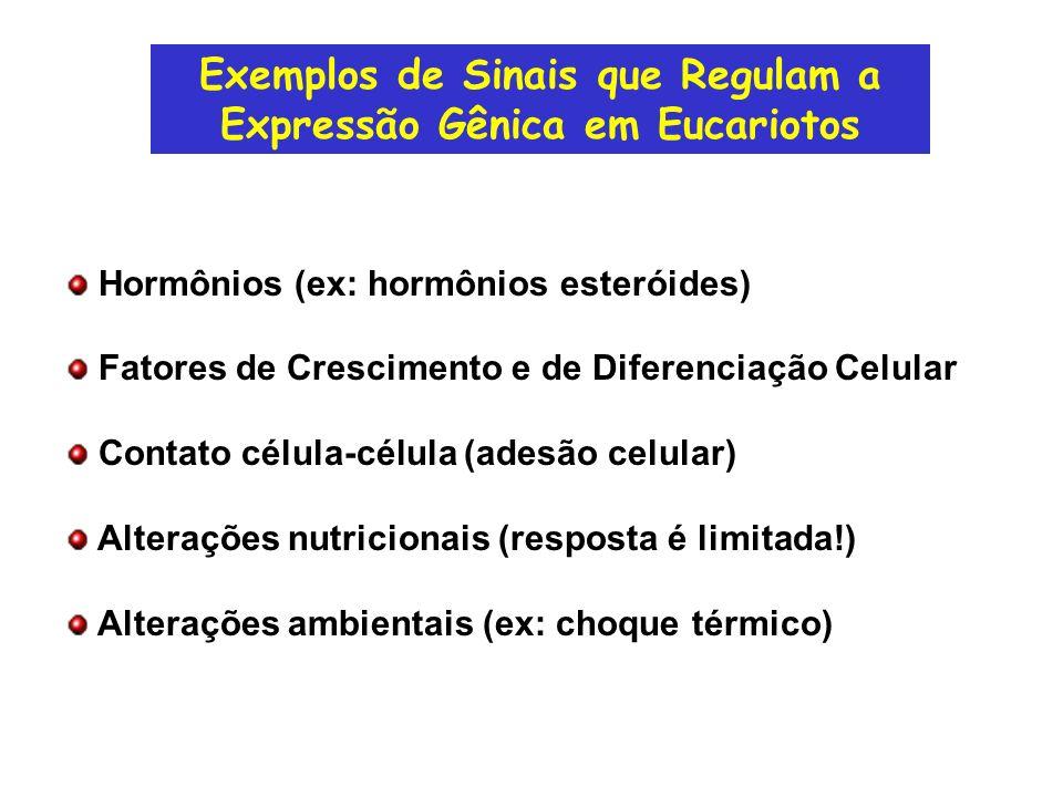 Exemplos de Sinais que Regulam a Expressão Gênica em Eucariotos