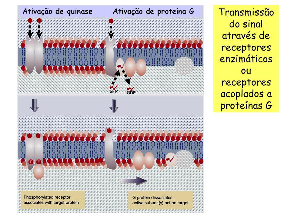 Ativação de quinase Ativação de proteína G