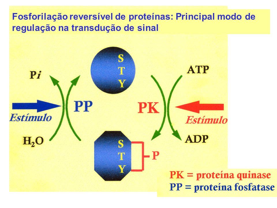 Fosforilação reversível de proteínas: Principal modo de regulação na transdução de sinal