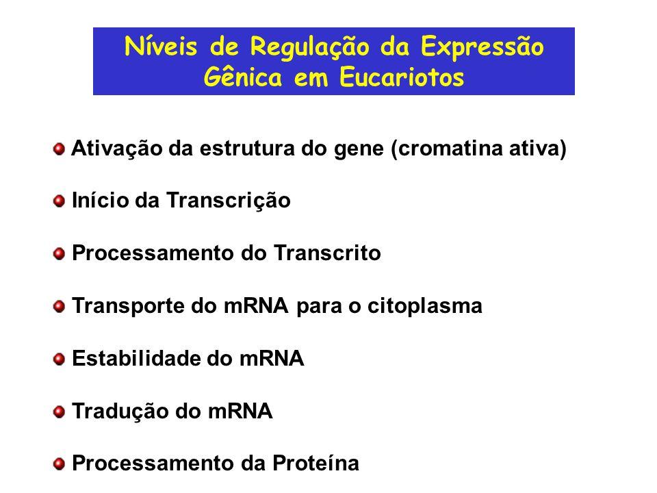 Níveis de Regulação da Expressão Gênica em Eucariotos