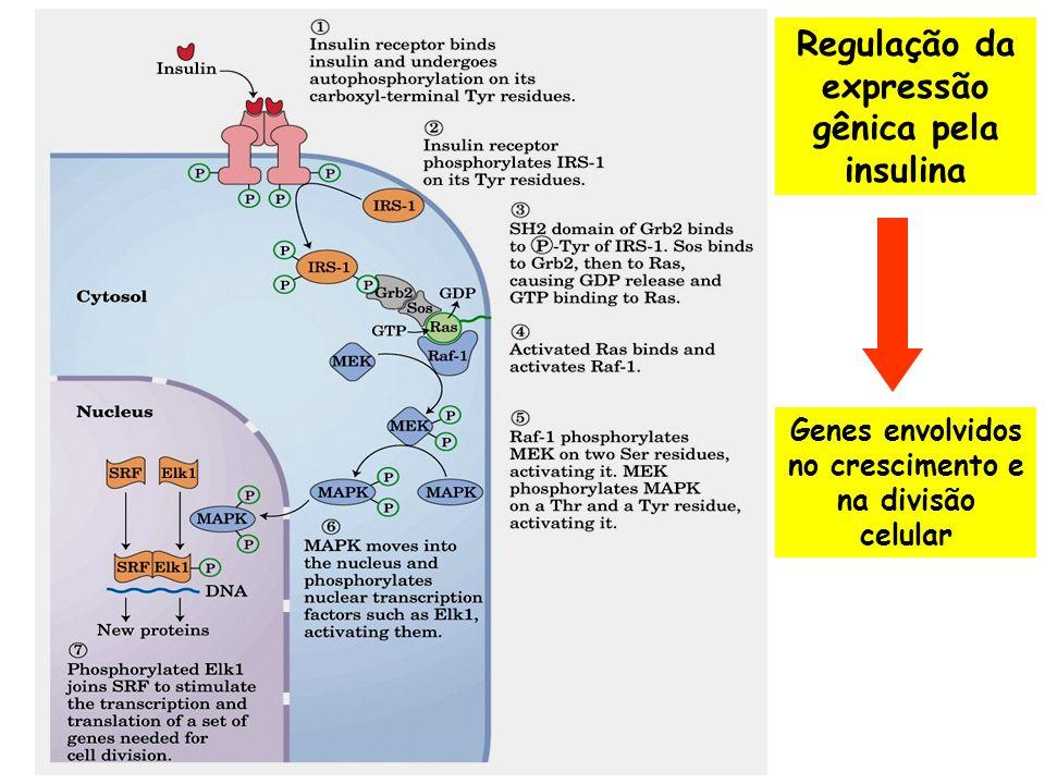 Regulação da expressão gênica pela insulina