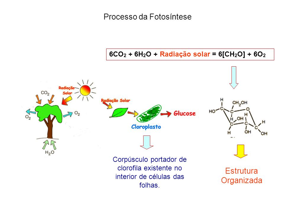 Processo da Fotosíntese