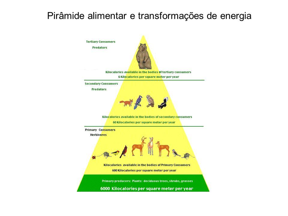 Pirâmide alimentar e transformações de energia