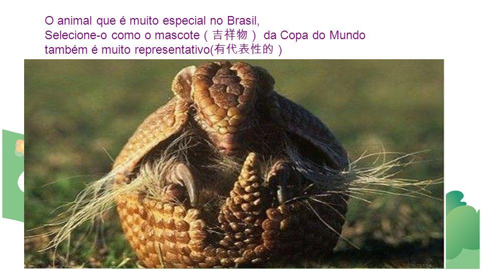 O animal que é muito especial no Brasil,