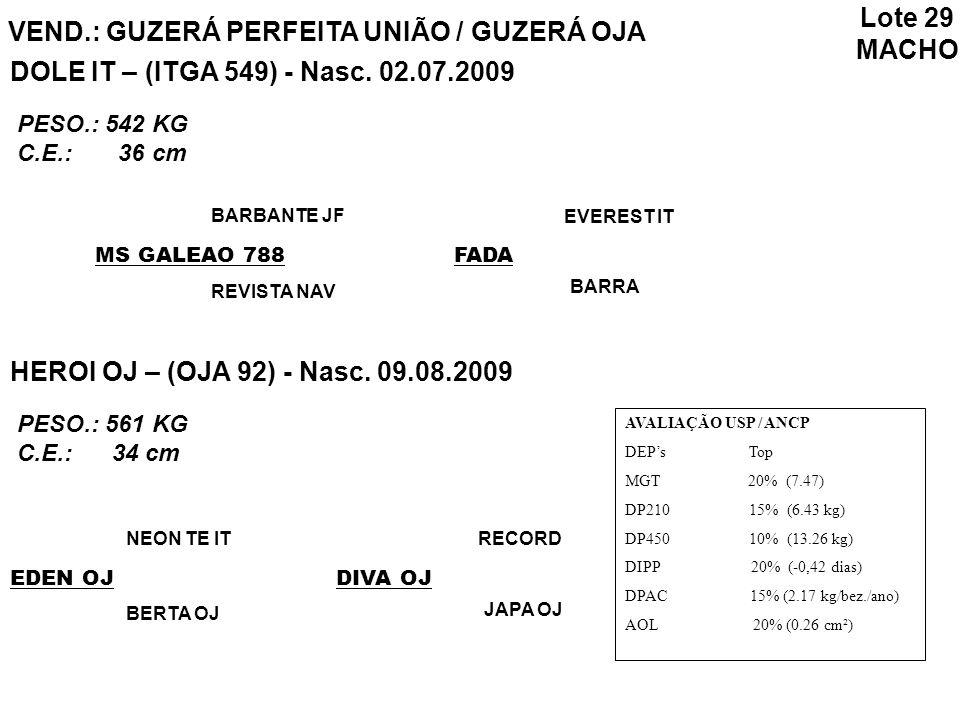 VEND.: GUZERÁ PERFEITA UNIÃO / GUZERÁ OJA