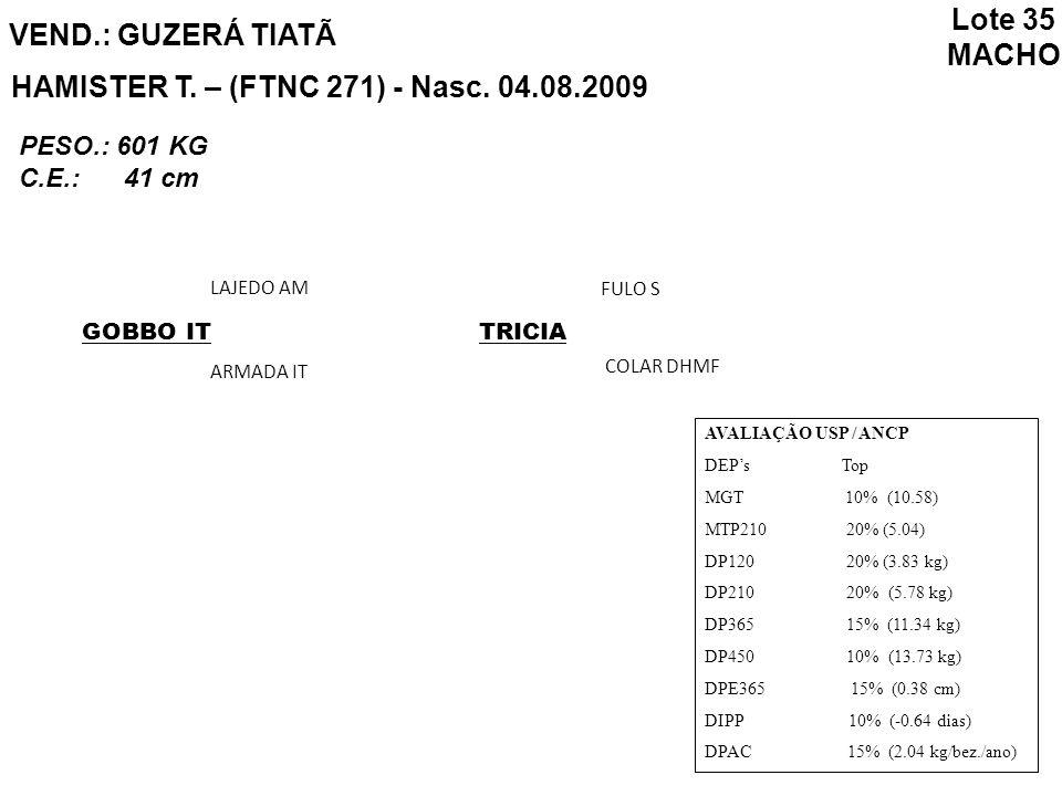 HAMISTER T. – (FTNC 271) - Nasc. 04.08.2009