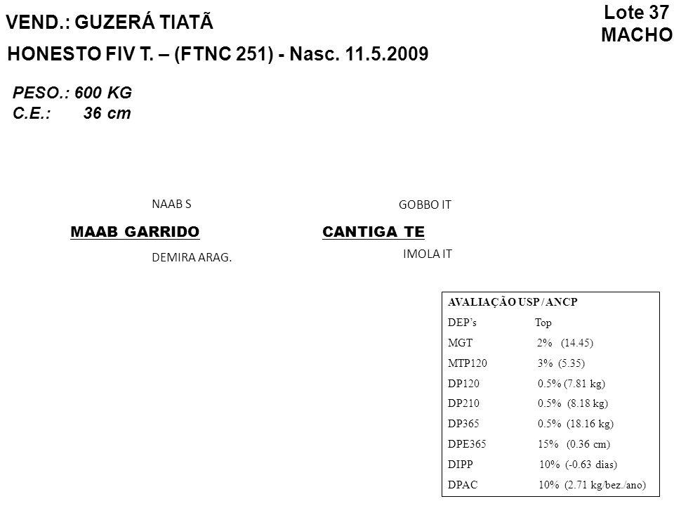 HONESTO FIV T. – (FTNC 251) - Nasc. 11.5.2009