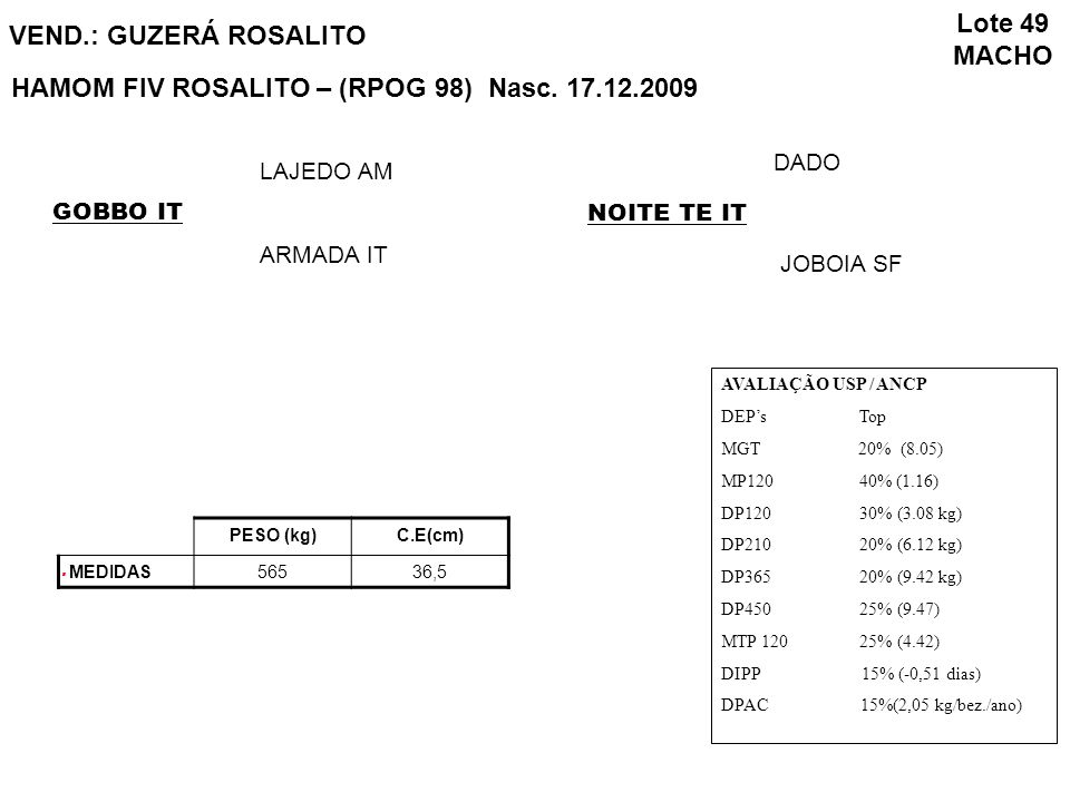 HAMOM FIV ROSALITO – (RPOG 98) Nasc. 17.12.2009