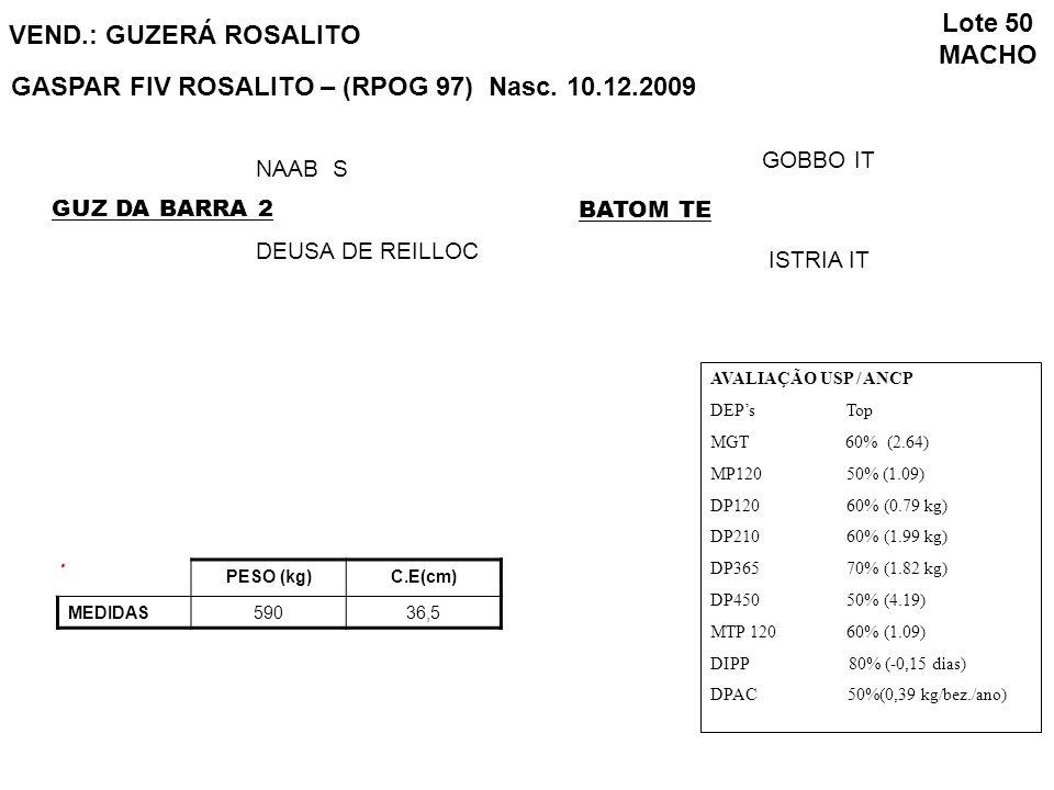 GASPAR FIV ROSALITO – (RPOG 97) Nasc. 10.12.2009