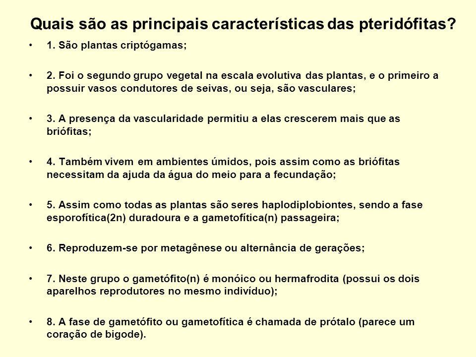 Quais são as principais características das pteridófitas