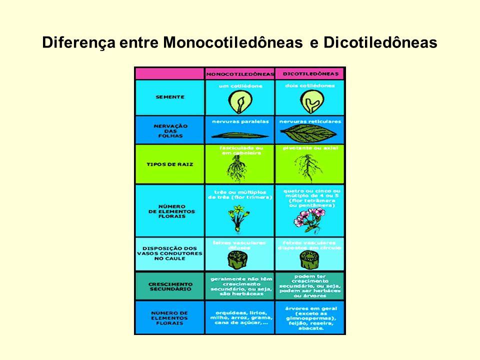Diferença entre Monocotiledôneas e Dicotiledôneas