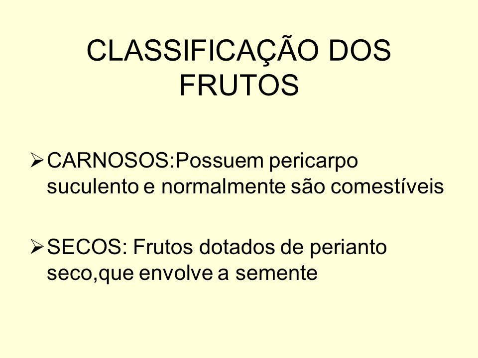 CLASSIFICAÇÃO DOS FRUTOS