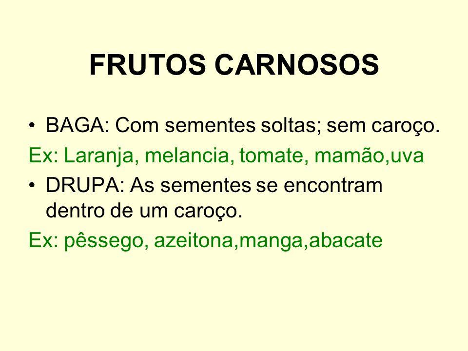 FRUTOS CARNOSOS BAGA: Com sementes soltas; sem caroço.