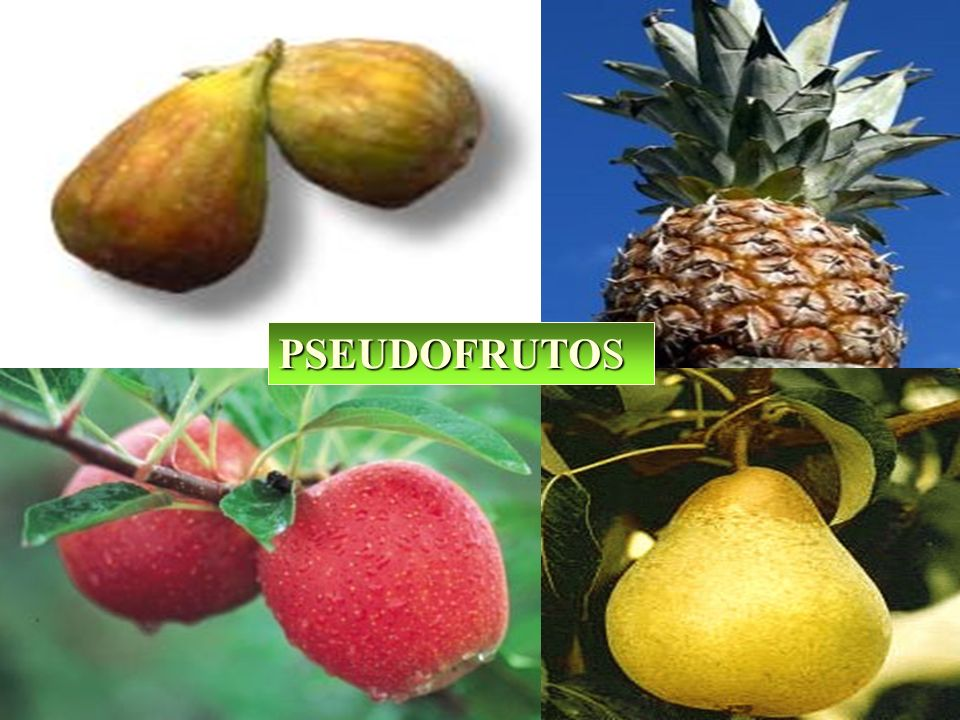 PSEUDOFRUTOS