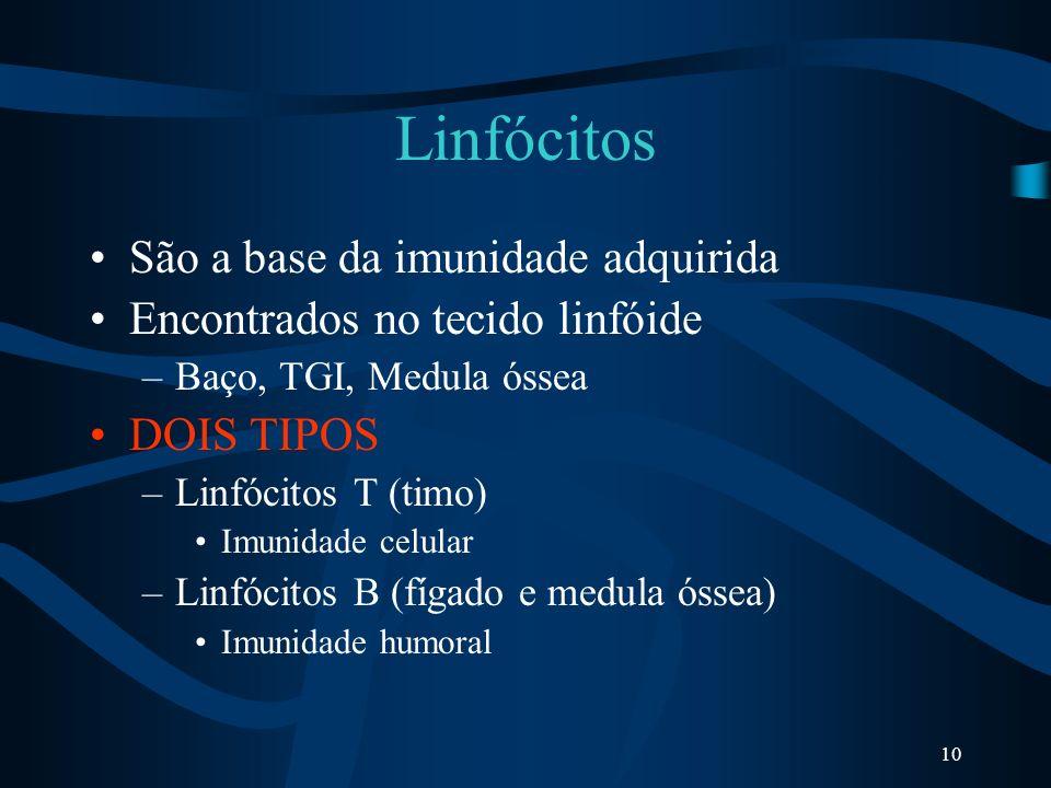 Linfócitos São a base da imunidade adquirida