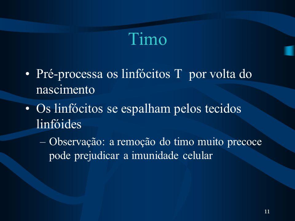 Timo Pré-processa os linfócitos T por volta do nascimento