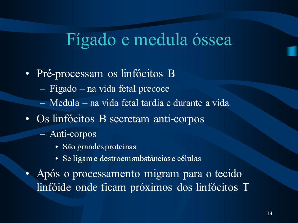 Fígado e medula óssea Pré-processam os linfócitos B