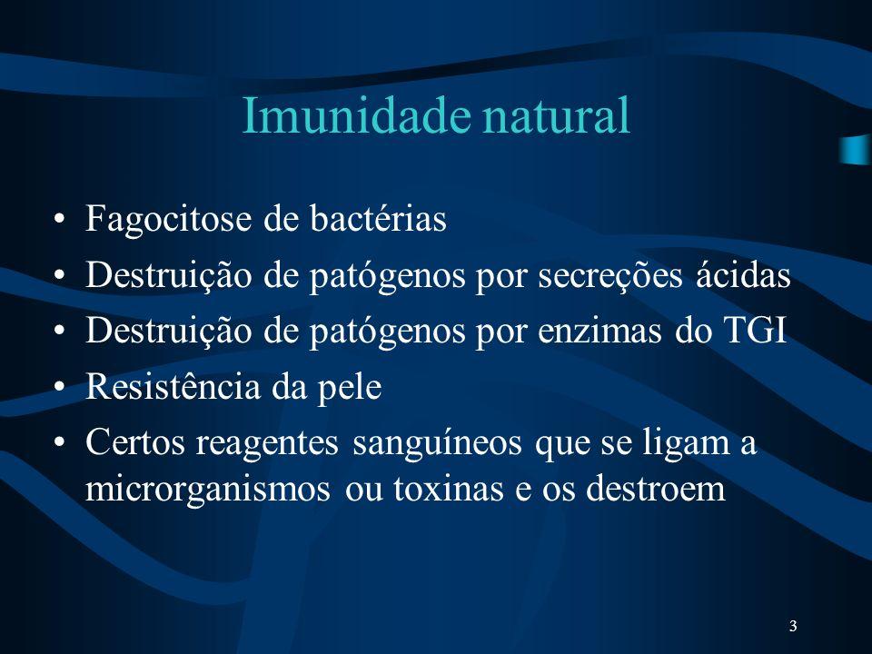 Imunidade natural Fagocitose de bactérias