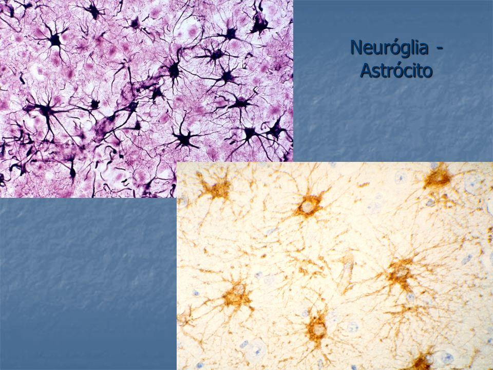 Neuróglia - Astrócito