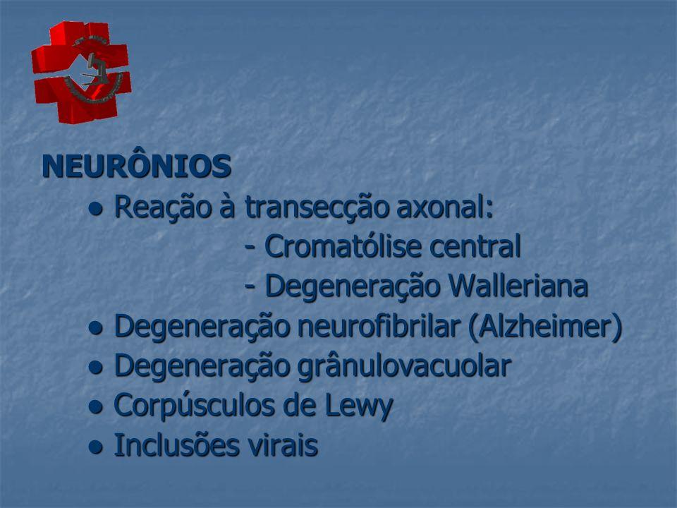 NEURÔNIOS● Reação à transecção axonal: - Cromatólise central. - Degeneração Walleriana. ● Degeneração neurofibrilar (Alzheimer)
