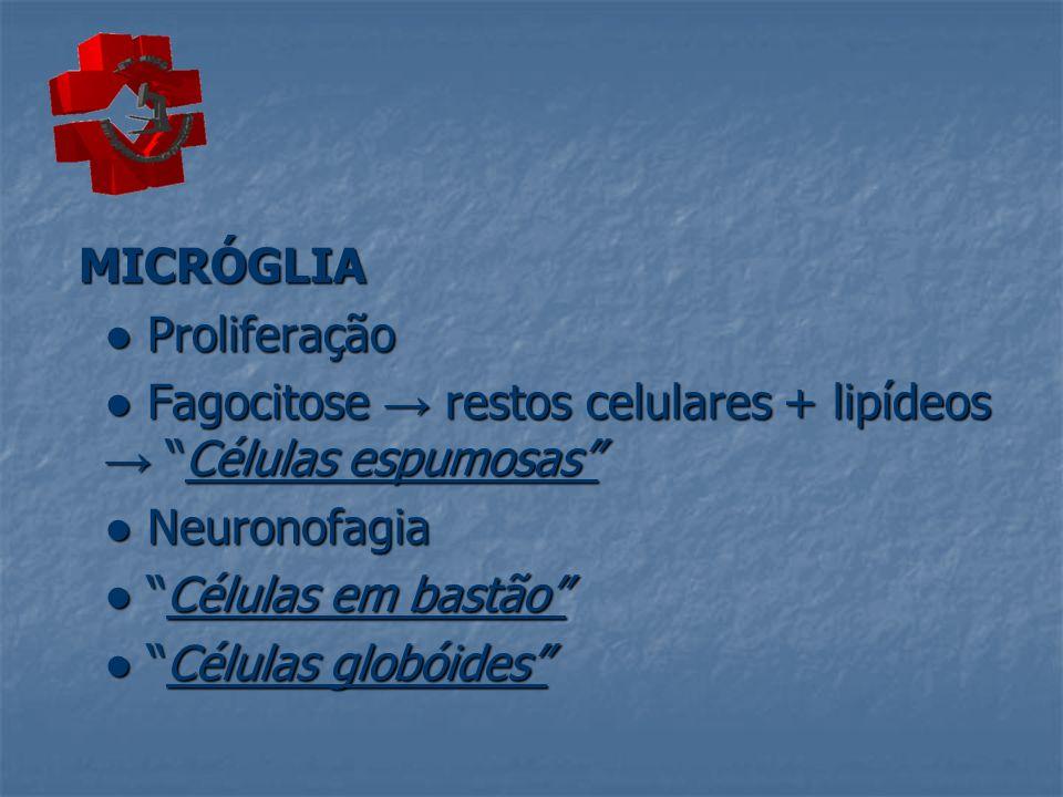 MICRÓGLIA ● Proliferação. ● Fagocitose → restos celulares + lipídeos → Células espumosas ● Neuronofagia.