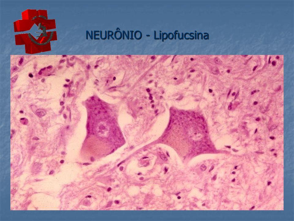 NEURÔNIO - Lipofucsina