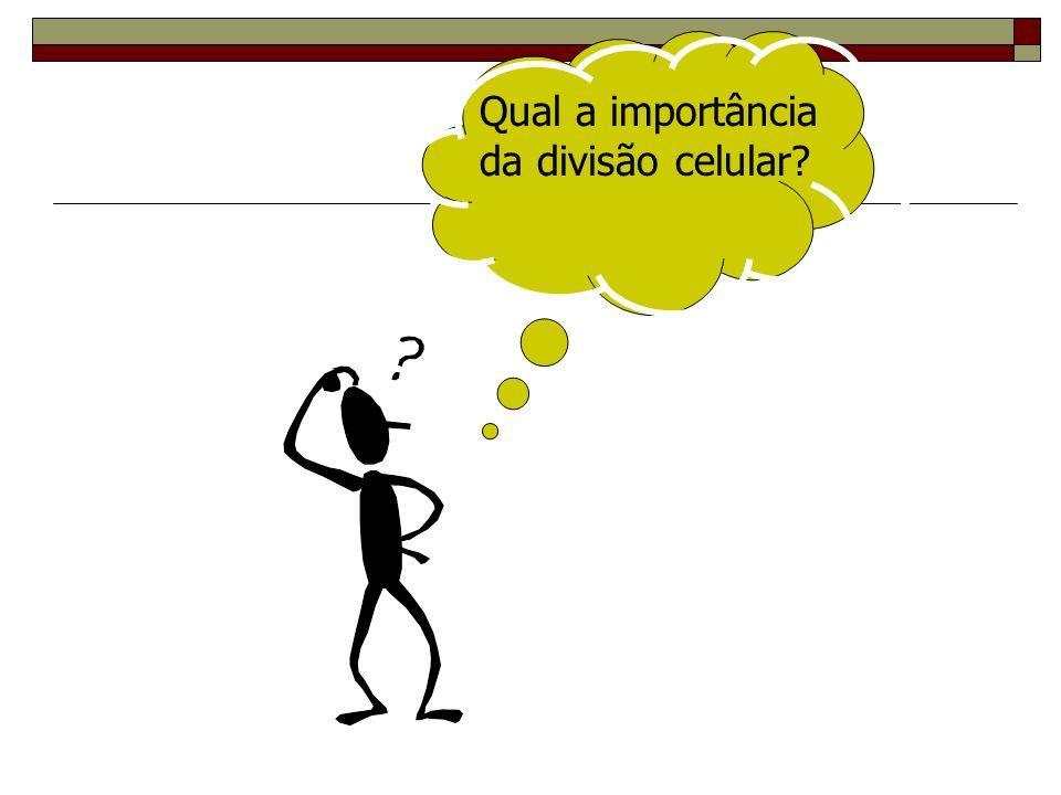 Qual a importância da divisão celular