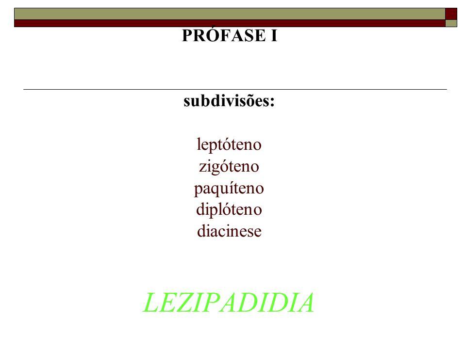 PRÓFASE I subdivisões: leptóteno zigóteno paquíteno diplóteno diacinese LEZIPADIDIA